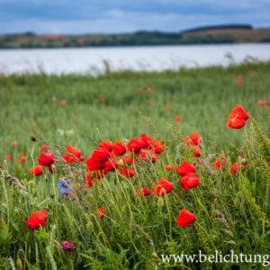 Felder nahe Alt-Reddevitz